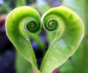 green hearts in nature spirals